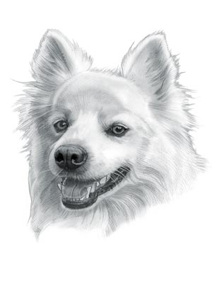 Low Maintenance Dogs - American Eskimo Dog