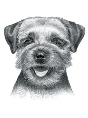 Terrier Dogs - Picture of Border Terrier