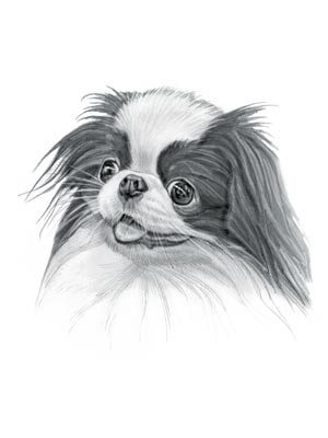 Japanese Chin Dog